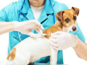 Эндоскопия в современной ветеринарии